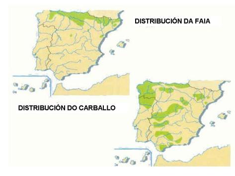 vexetacion_espana_distribucion_1