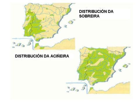 vexetacion_espana_distribucion_2