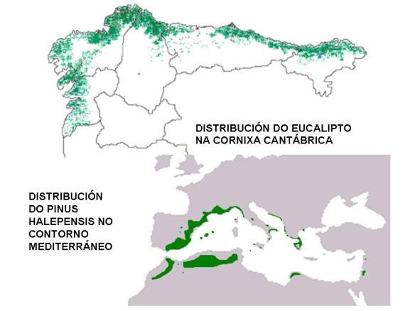 vexetacion_espana_distribucion_3