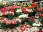 vannes_mercado_flores